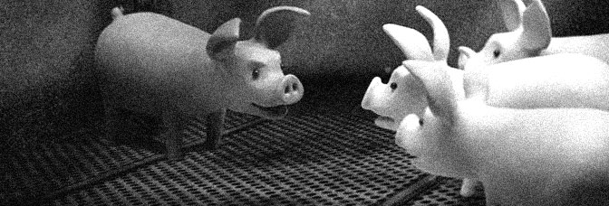 A scene from A PIG'S TAIL, directed by Sarah Cox for the Humane Society of the United States.